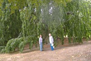 The Elm Trees